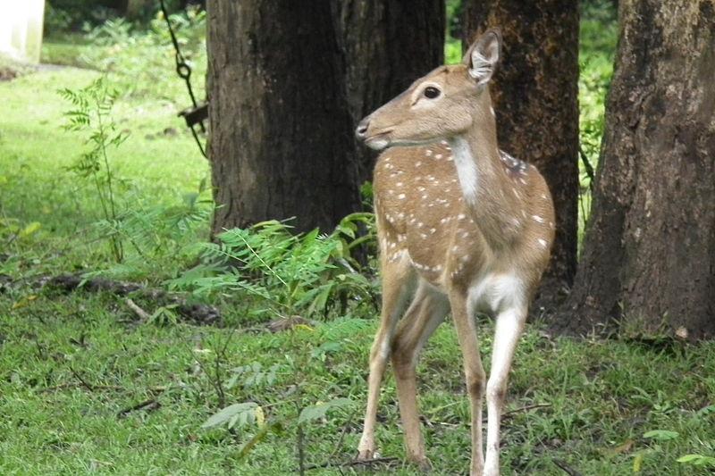 800px-Nagarhole_National_Park,_Kodagu_6909