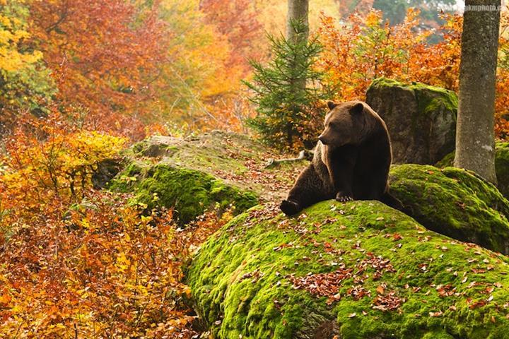 356221xcitefun-bavarian-forest-1